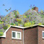 Dakpan voor groene daken