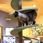 Huis ingericht voor katten