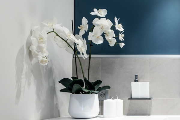 Muurverf Voor De Badkamer ~ Tips Welke planten voor de badkamer?  Lifestylelady nl