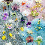 Orchidee Stijlgids