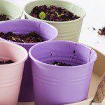 Gezien bij Xenos; verbouw je eigen groente, fruit, thee en kruiden