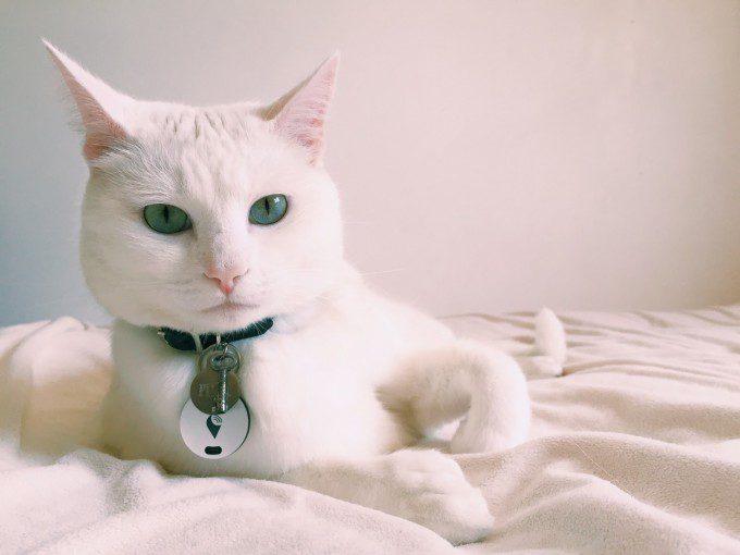 cat trackr