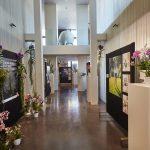 De Internationale Dag van de Orchidee