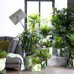 Woonplant van de maand; de palm