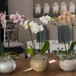 Mail & win; Orchidee kalender ontworpen door Meagan Morrison